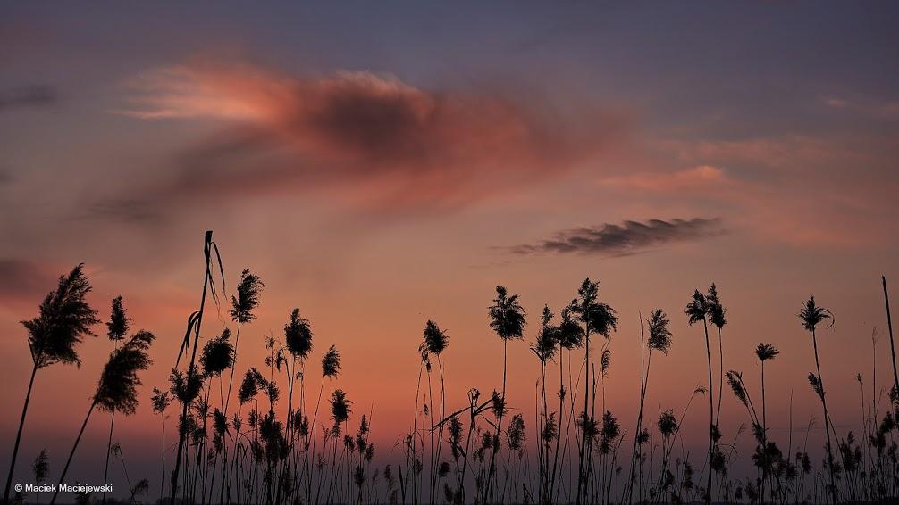 F. Maciek Maciejewski | Zachód słońca nad Narwią