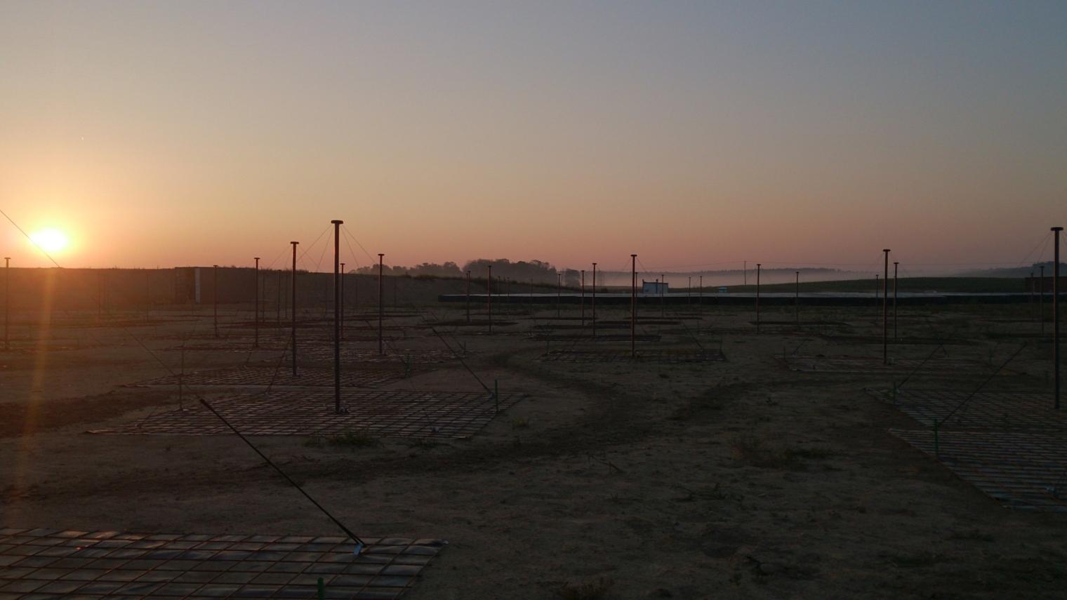 Pole LOFARa w Bałdach o wschodzie Słońca.