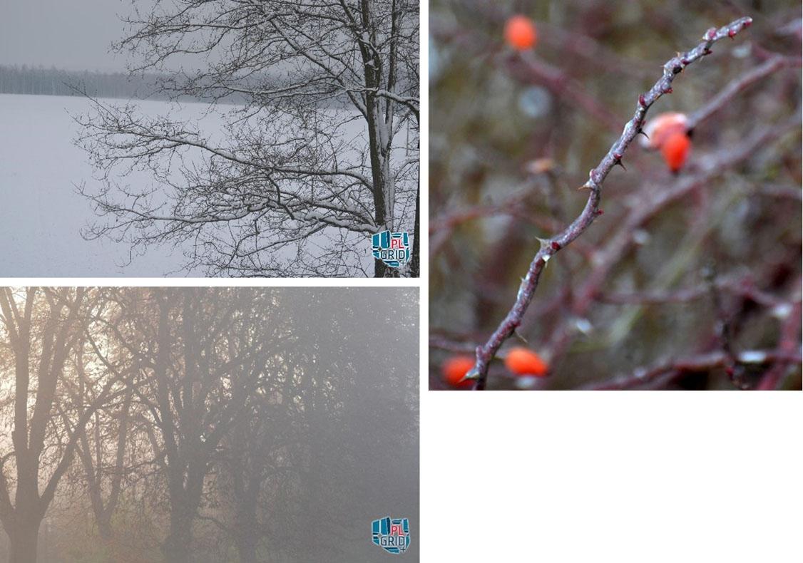Wstąpienie zjawisk utrwalone na zdjęciach: pokrywa śnieżna, mgła, lód na gałęziach w wyniku opadu marznącego deszczu.
