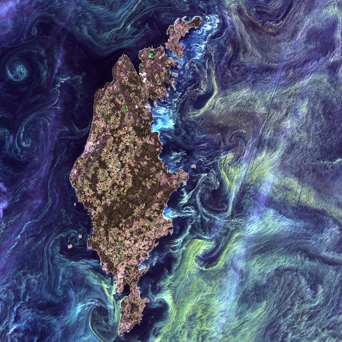 """Natura niczym Van Gogh. Ogromne skupiska zielonkawego fitoplankoru wirują wokół Gotlandii, przypominając słynną """"Gwiaździsta noc"""" (F. USGS on Unsplash)."""
