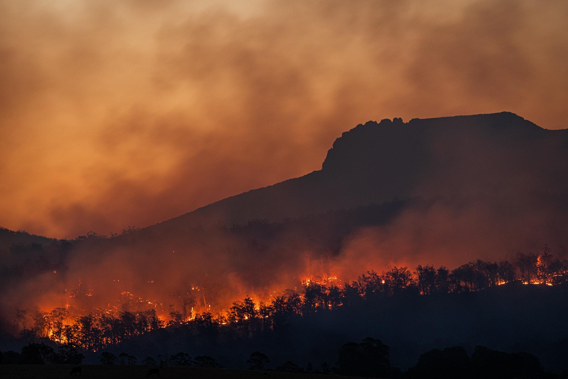 Pożar buszu, Tasmania, Australia. F. Matt Palmer on Unsplash.